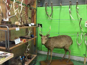 image 50 300x225 - 都心から近い猟師体験ができる猟師工房