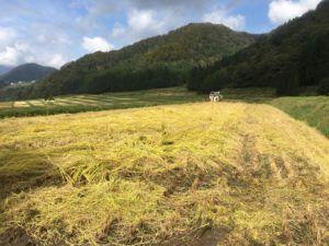 img 4711 300x225 - 新潟県湯沢町で稲刈りに挑戦