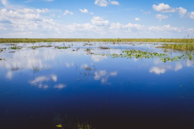 moniquedecaro_everglades