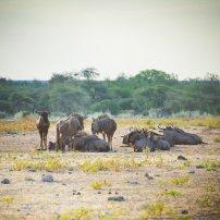 moniquedecaro_namibia-0757