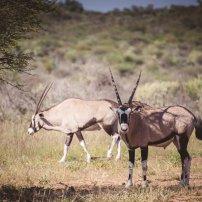 moniquedecaro_namibia-8436
