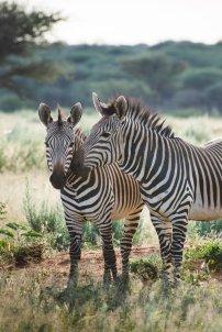 moniquedecaro_namibia-8608