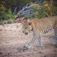 moniquedecaro_namibia-8697