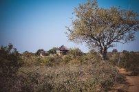 moniquedecaro-makumu-south-africa