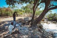 moniquedecaro-kenya-chale-island-104