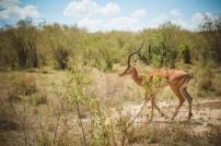 moniquedecaro-mara-bush-camp-kenia-3276
