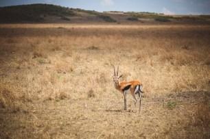 moniquedecaro-mara-bush-camp-kenia-3339