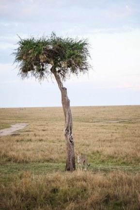 moniquedecaro-mara-bush-camp-kenia-3849