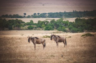 moniquedecaro-mara-bush-camp-kenia-5306