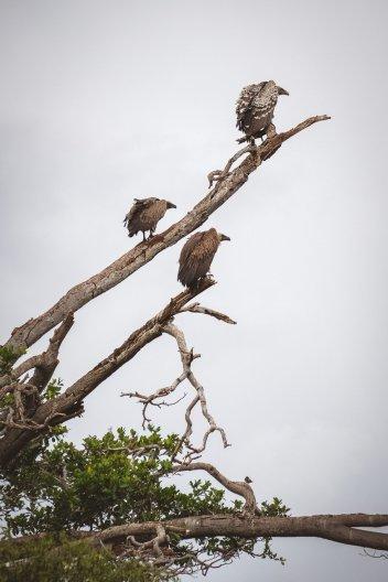 moniquedecaro-mara-bush-camp-kenia-5348