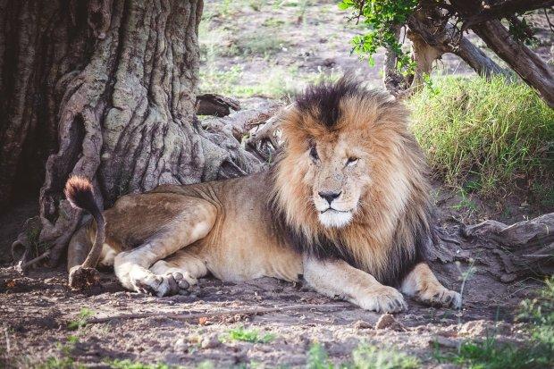 moniquedecaro-mara-bush-camp-kenia-5714