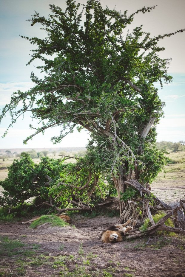 moniquedecaro-mara-bush-camp-kenia-5762