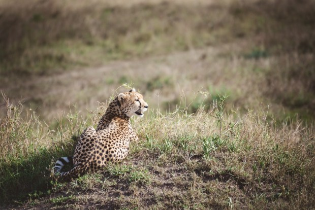 moniquedecaro-mara-bush-camp-kenia-5850