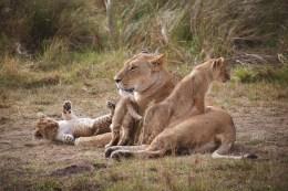 moniquedecaro-mara-bush-camp-kenia-5963