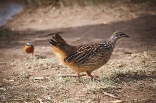 moniquedecaro-mara-bush-camp-kenia-6213