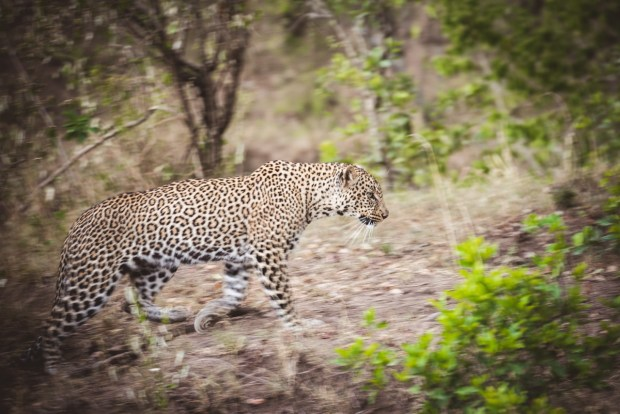 moniquedecaro-mara-bush-camp-kenia-6366