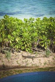 moniquedecaro-cempedak_island-4379