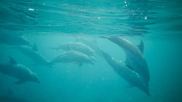 moniquedecaro_zanzibar_dolphin-11