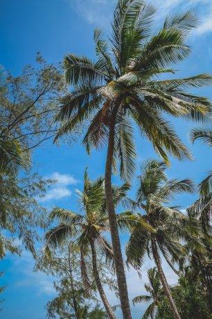 moniquedecaro-9184-pongwe-beach-zanzibar