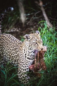 moniquedecaro-kings-camp-south-africa-2