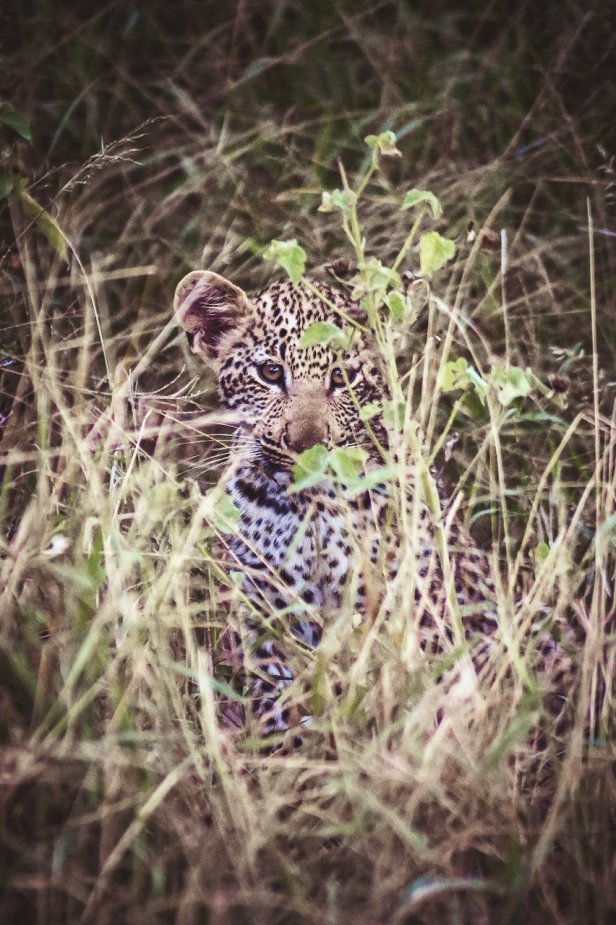 moniquedecaro-kings-camp-south-africa-4451