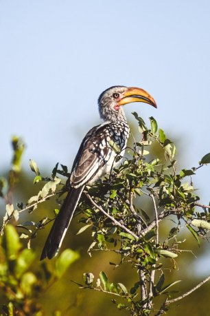 moniquedecaro-kings-camp-south-africa-4685