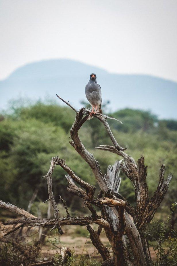 moniquedecaro-madikwe-hills-6452