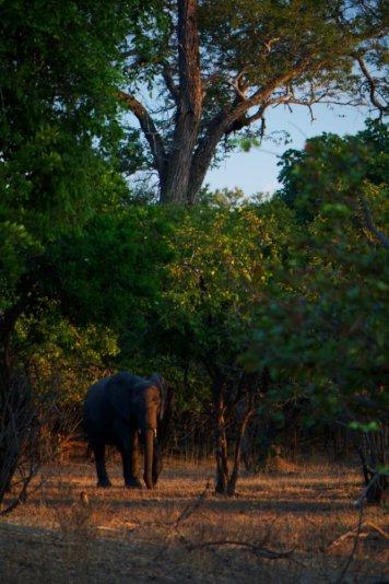 Elephant and canopy