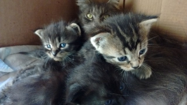 The first litter we caught from the stray cats having litters in the neighborhood.