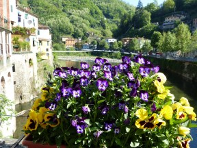 pansies on the bridgr