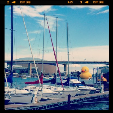Duck 046