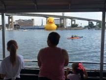 Duck 094