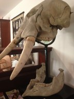 D'Arcy Thompson Museum of Zoology, Dundee