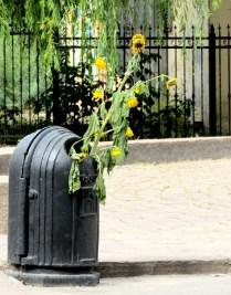 Sunflowers in the Dumps - Lviv Ukraine