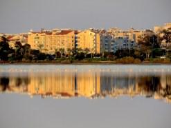 Mirrored Flamingos in Larnaca Cyprus