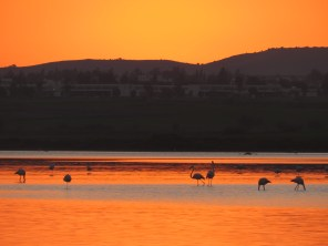 Flamingos at Sunset - Larnaca Cyprus - January 2016