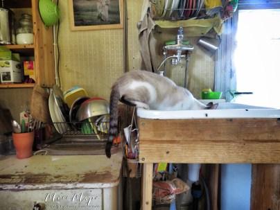 Cat in the sink - Southern Estonia - by Anika Mikkelson - Miss Maps - www.MissMaps.com