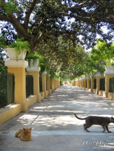 Welcoming Cats of Argotti Botanical Gardens - Malta - by Anika Mikkelson - Miss Maps - www.MissMaps.com