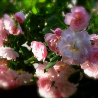 Pink Days in Bloom!