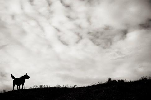 Dog And Sky