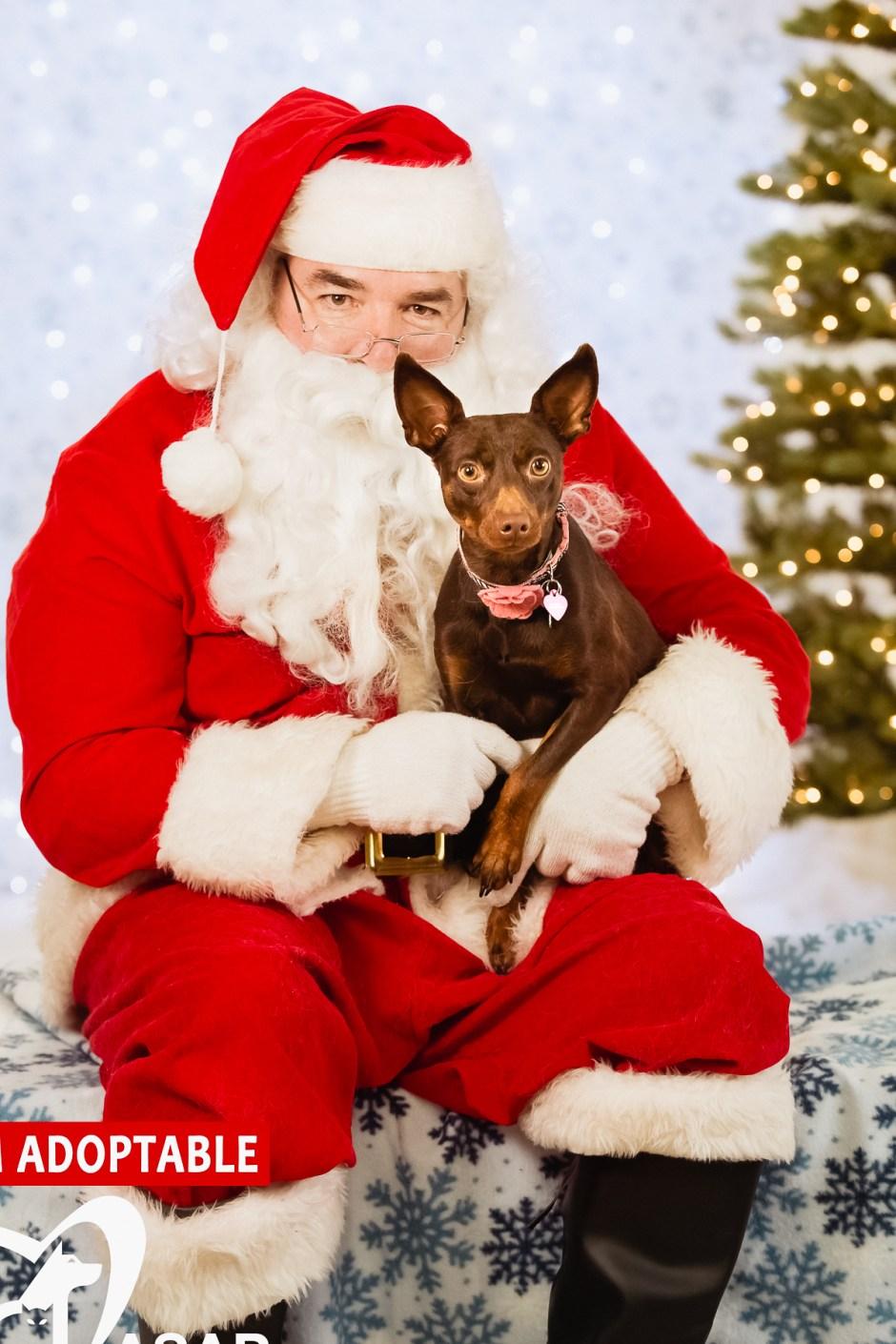 ASAP Santa Paws 2015