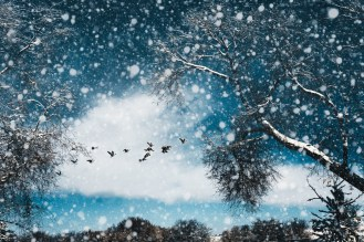 Canadian geese flying through dreamy winter landscape