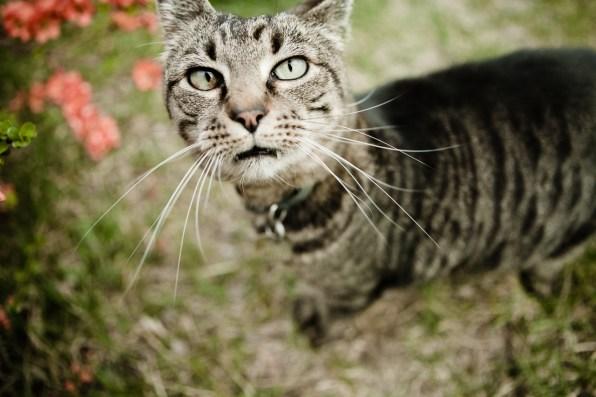 beautiful-life-gallery-cats-1040437