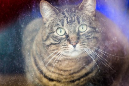 beautiful-life-gallery-cats-1092164