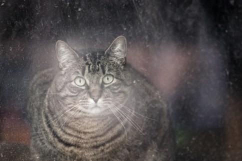 beautiful-life-gallery-cats-110