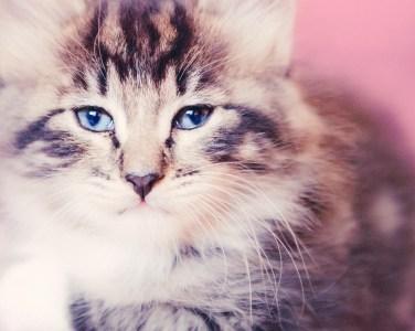 beautiful-life-gallery-cats-111