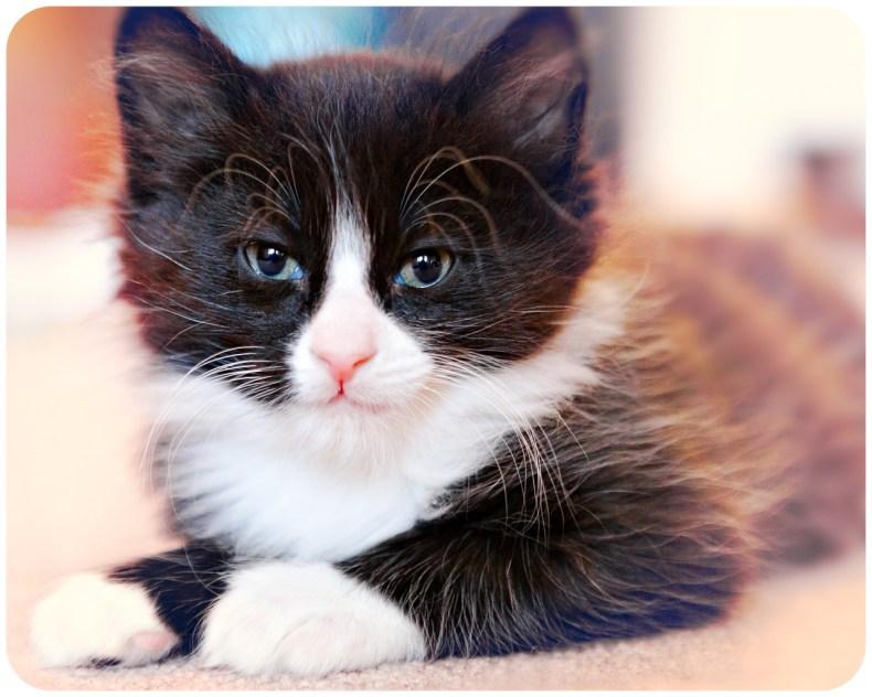 beautiful-life-gallery-cats-113