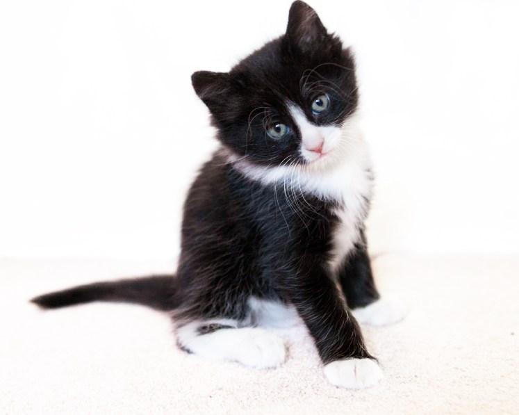 beautiful-life-gallery-cats-115