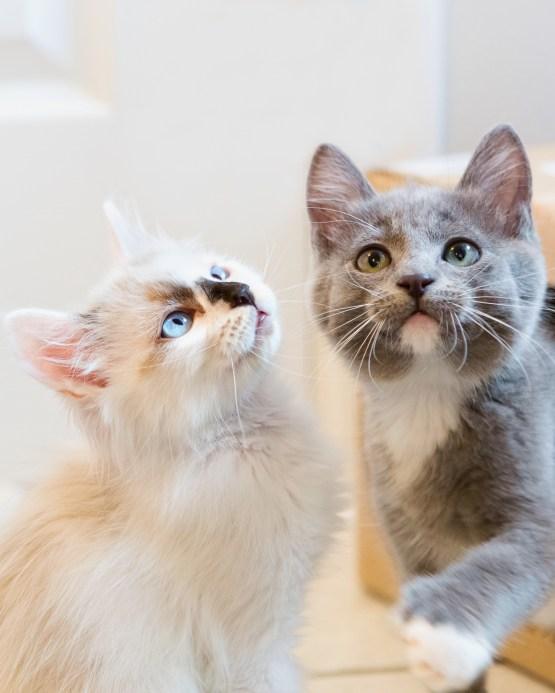 beautiful-life-gallery-cats-129