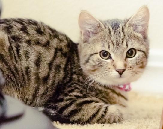 beautiful-life-gallery-cats-1388966